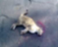 Lelőtte a macskát, fogházbüntetést kapott