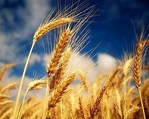 Miből készül a kincset érő kenyér?
