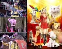 Cirkusz és varázslat - Vásárhelyre érkezik az Exit Cirkusz
