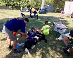 A menhelyi kutyákért kampányoltak