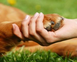 Az állatvédelem nem valósulhat meg társadalmi összefogás nélkül