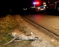 Megelőzhető a vadbaleset