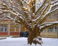 Ismét Platán Hét a Varga Tamás iskolában