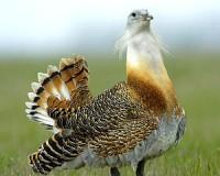 Egy különleges madár a diákok szemével