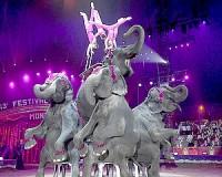Jön az Eötvös Cirkusz Vásárhelyre