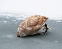 Téli Mártély - fotókba örökítve