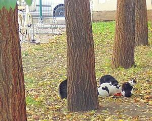 Megoldás a kóbor macskák elszaporodására