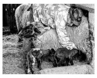 Pásztorok a mai világban