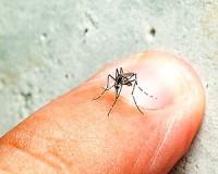 A szúnyogcsípés veszélyei emberre, állatra