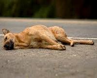 Kutyavilág - Dokumentumriport