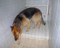 Kilenc éves kislányt mart meg egy németjuhász kutya
