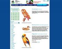 Madarat - nemcsak - tolláról, internetről is